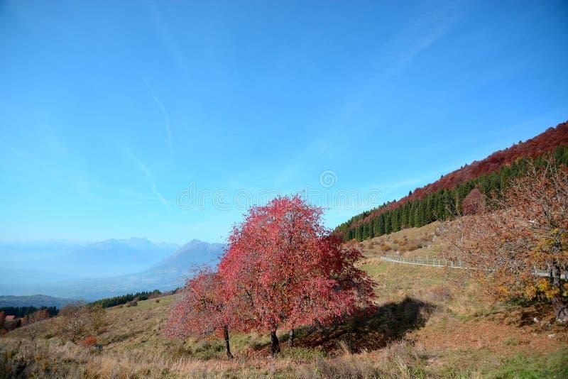 Το κόκκινο του φθινοπώρου στα βουνά στοκ εικόνες με δικαίωμα ελεύθερης χρήσης