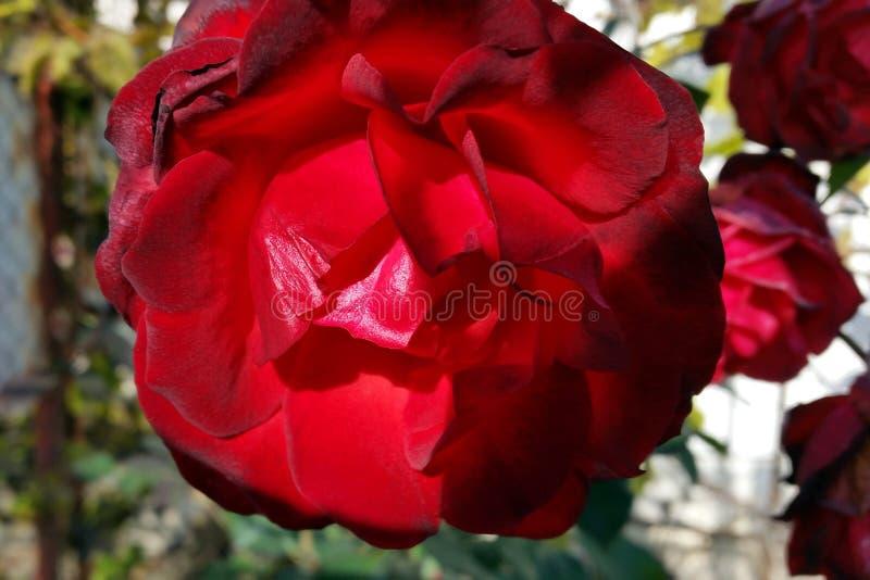 Το κόκκινο του φθινοπώρου στοκ φωτογραφία με δικαίωμα ελεύθερης χρήσης