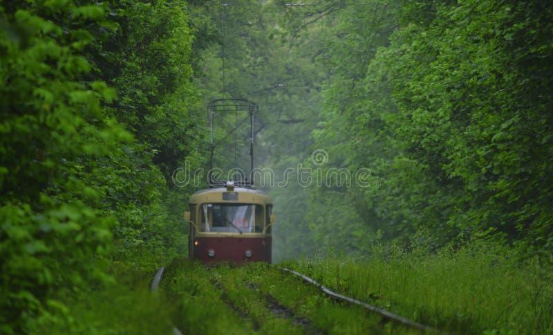 Το κόκκινο τραμ αφήνει την ομίχλη στο πράσινο δάσος στοκ φωτογραφία με δικαίωμα ελεύθερης χρήσης