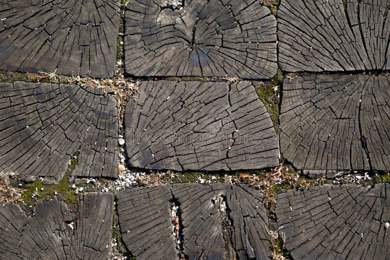 Μια διατομή του κορμού ενός παλαιού δέντρου διανυσματική απεικόνιση