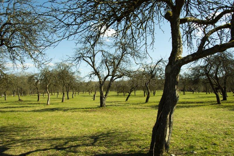 Το λιβάδι καλυμμένο δέντρο τοπίο τοπίου μπλε ουρανού λιβαδιών το φωτε στοκ φωτογραφία με δικαίωμα ελεύθερης χρήσης