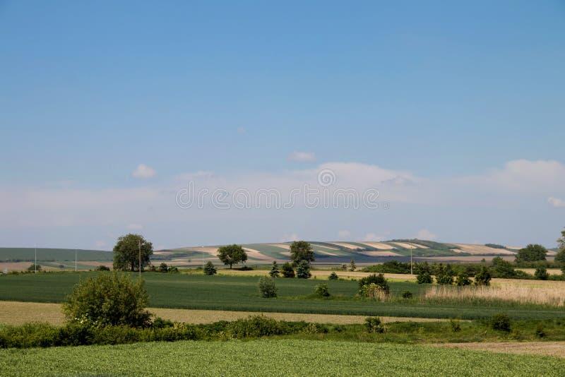 Το λιβάδι Vojvodina στην περιοχή της Σερβίας, καλλιέργησε με το καλαμπόκι και τα λαχανικά, κοντά στην πόλη Zrenjanin, στις 18 Μαΐ στοκ φωτογραφία