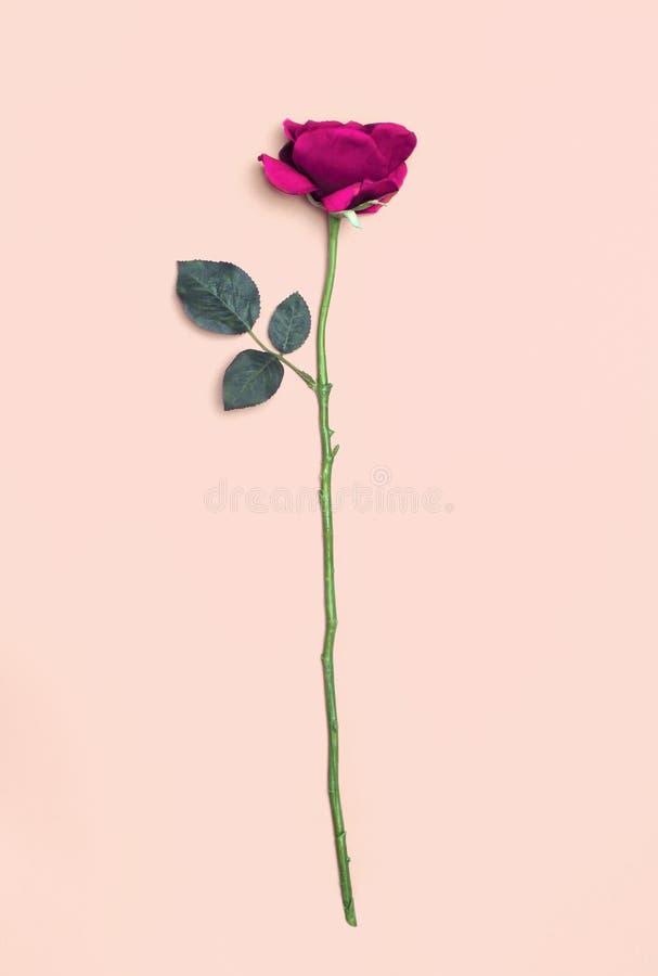 το λουλούδι ανασκόπηση&si στοκ φωτογραφία