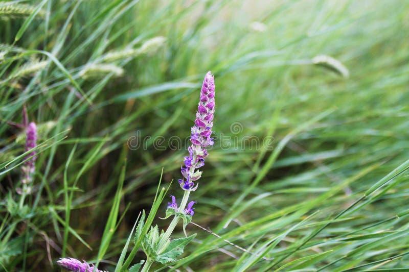 Το λουλούδι από το ρωσικό τομέα στοκ εικόνα