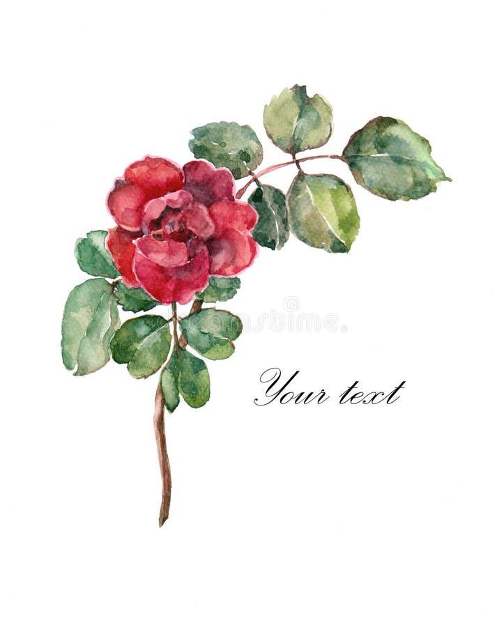 Το λουλούδι αυξήθηκε Watercolor Απεικόνιση για την κάρτα διανυσματική απεικόνιση