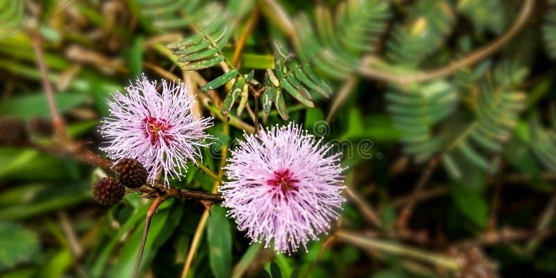 Το λουλούδι πριγκηπισσών είναι στενοχωρημένο στοκ φωτογραφία με δικαίωμα ελεύθερης χρήσης