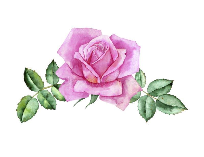 Το λουλούδι σχεδίων Watercolor αυξήθηκε ελεύθερη απεικόνιση δικαιώματος