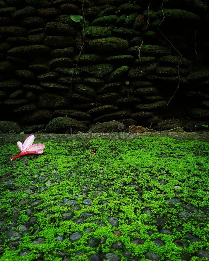 το λουλούδι υπολογιστών συνδυασμού χρώματος χρώματος παρήγαγε την αρμονική επικεφαλής εικόνα στοκ φωτογραφίες με δικαίωμα ελεύθερης χρήσης