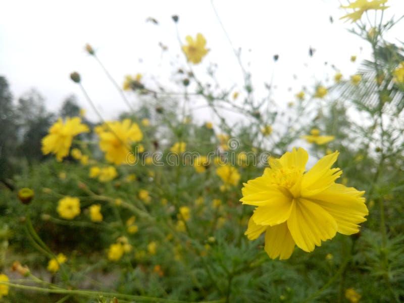 Το λουλούδι χτυπά στοκ φωτογραφία