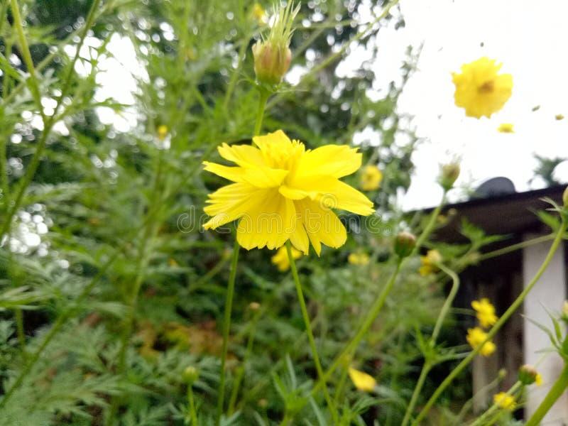 Το λουλούδι χτυπά στοκ εικόνα με δικαίωμα ελεύθερης χρήσης