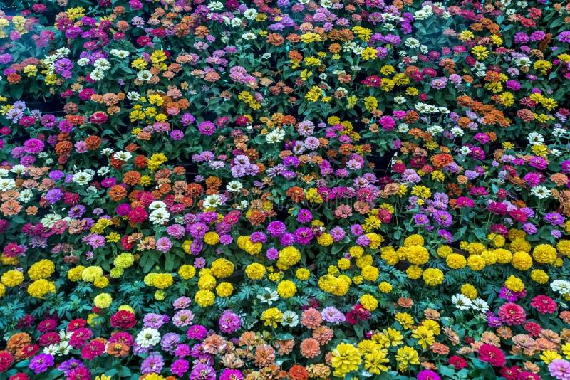 Το λουλούδι Lalbagh παρουσιάζει τον Ιανουάριο του 2019 - μικτή επίδειξη λουλουδιών στοκ εικόνες