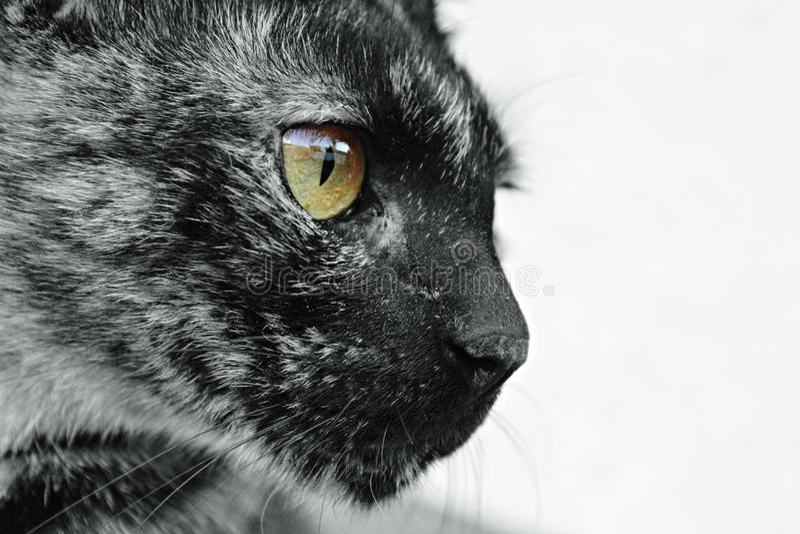 Το μάτι της τίγρης στοκ φωτογραφία με δικαίωμα ελεύθερης χρήσης