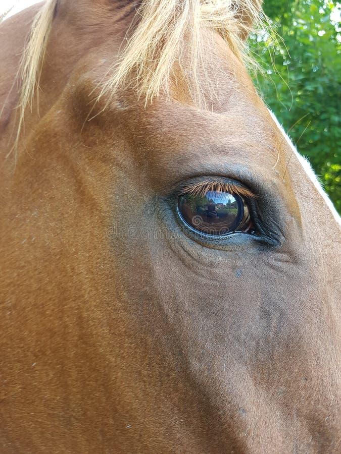 Το μάτι του αλόγου στοκ φωτογραφία