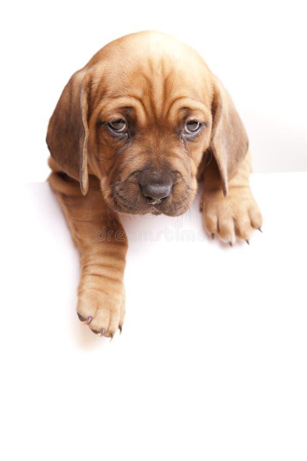 το μήνυμα σκυλιών στέλνει στοκ εικόνα