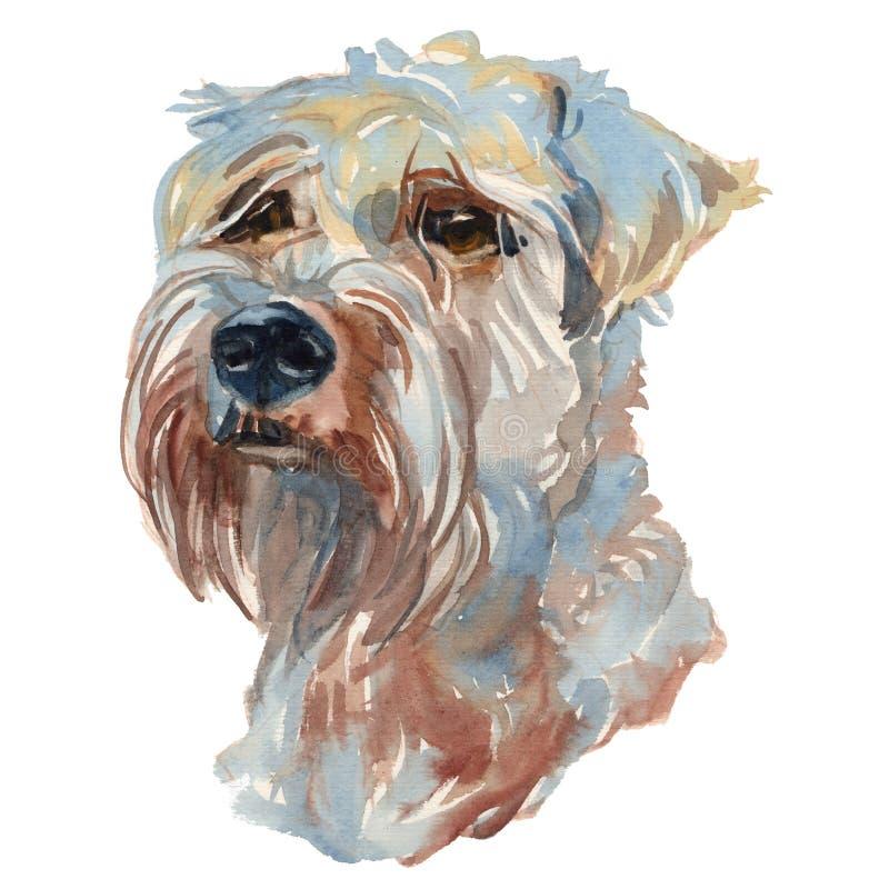 Το μαλακός-ντυμένο σιταρένιο χέρι watercolor τεριέ χρωμάτισε το λιμένα σκυλιών ελεύθερη απεικόνιση δικαιώματος