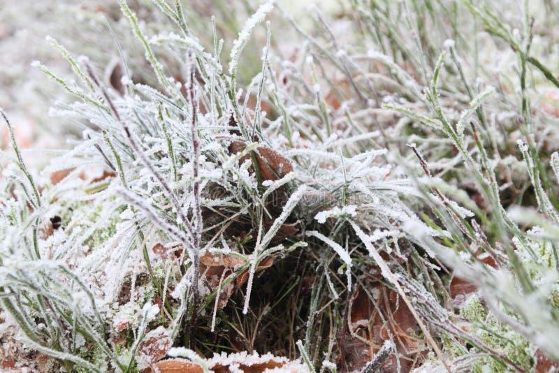 Το μαλακό χιόνι, που κρύβει μεταξύ της χλόης στοκ εικόνες