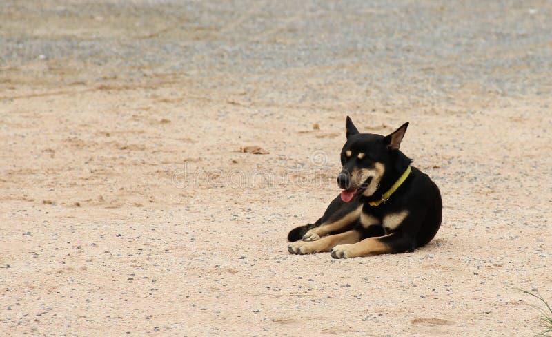 Το μαύρο σκυλί περιμένει στοκ φωτογραφίες