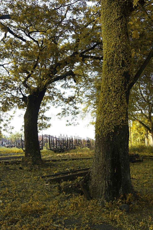 Το μεγάλο δέντρο στοκ φωτογραφία