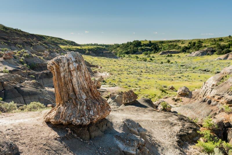 Το μεγάλο πετρώνω κολόβωμα αγνοεί την κοιλάδα στοκ εικόνες
