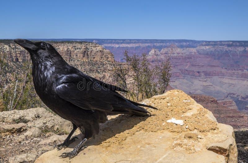 Το μεγάλο εθνικό πάρκο φαραγγιών #9 στοκ φωτογραφία με δικαίωμα ελεύθερης χρήσης