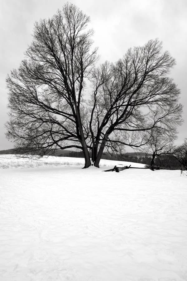 Το μεγάλο παλαιό δέντρο στο χιόνι στην κοιλάδα σφυρηλατεί το εθνικό πάρκο στοκ εικόνα με δικαίωμα ελεύθερης χρήσης