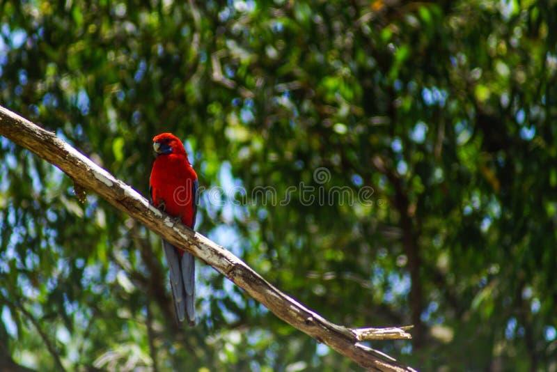 Τολμηρό πουλί στοκ φωτογραφίες με δικαίωμα ελεύθερης χρήσης