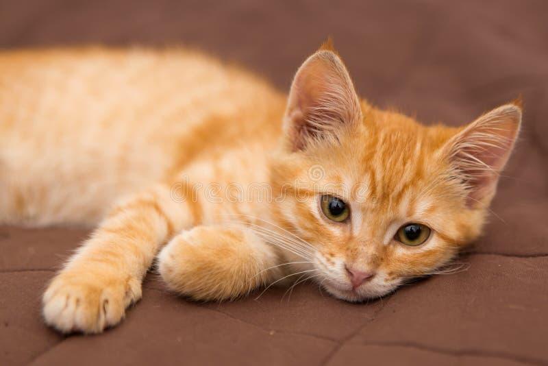 Το μικρό γατάκι βρίσκεται στο κρεβάτι