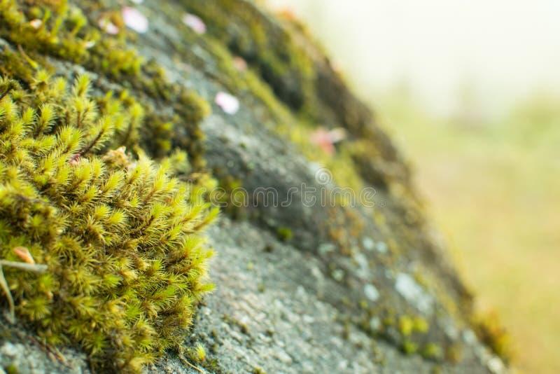 Το μικρό διετές φυτό αυξάνεται καλά στο χειμερινό δάσος στοκ φωτογραφία με δικαίωμα ελεύθερης χρήσης