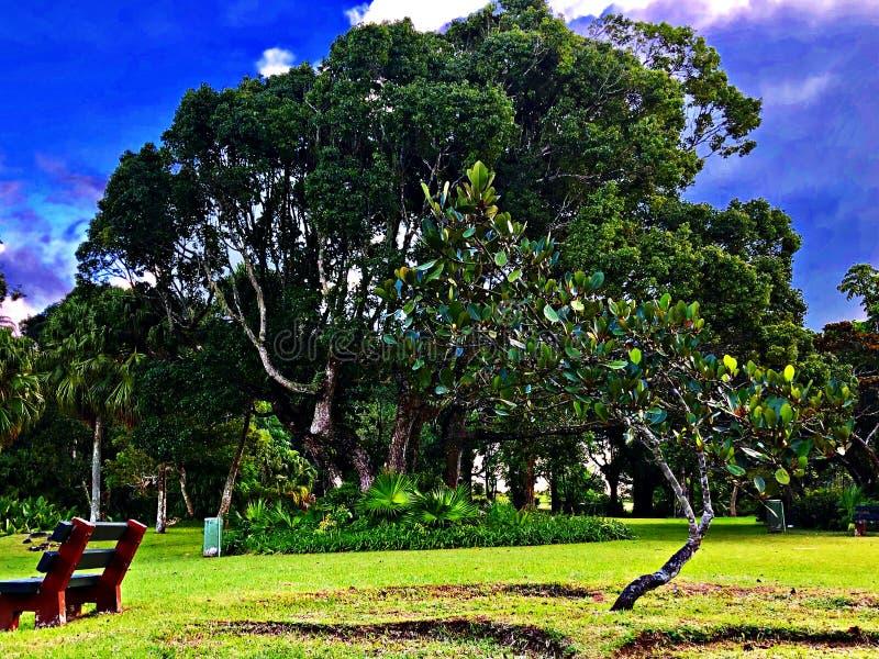 Το μικρό και μεγάλο δέντρο, νησί του Μαυρίκιου στοκ φωτογραφία με δικαίωμα ελεύθερης χρήσης