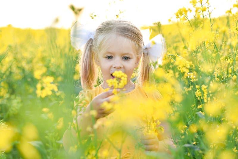 Το μικρό κορίτσι αναρωτιέται στον τομέα με τα κίτρινα λουλούδια στοκ φωτογραφία