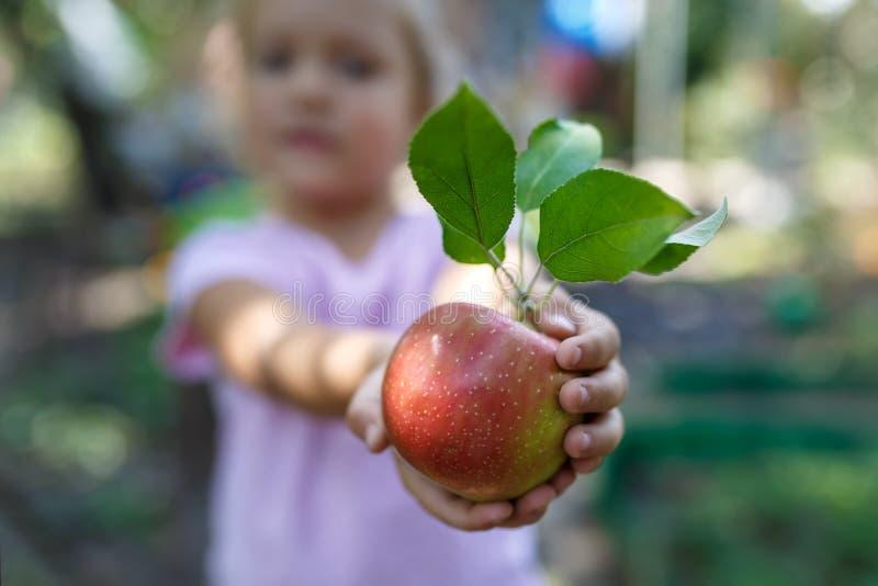 Το μικρό κορίτσι κρατά το όμορφο ώριμο κόκκινο μήλο με τα πράσινα φύλλα στοκ φωτογραφίες