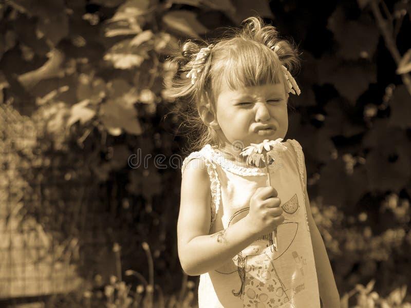 Το μικρό κορίτσι ρουθουνίζει το λουλούδι, το μικρό κορίτσι είναι στριμμένο, αστείο πρόσωπο, ξένοιαστη παιδική ηλικία στοκ εικόνα