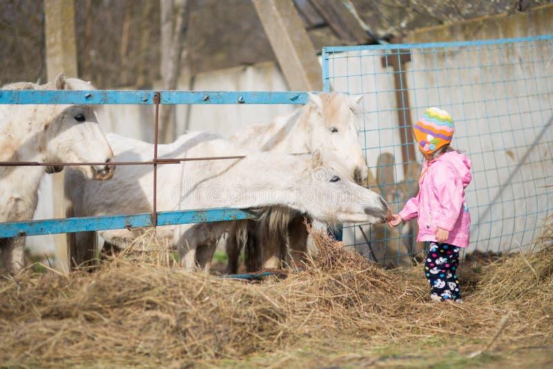 Το μικρό κορίτσι ταΐζει τα άλογα στοκ εικόνες με δικαίωμα ελεύθερης χρήσης