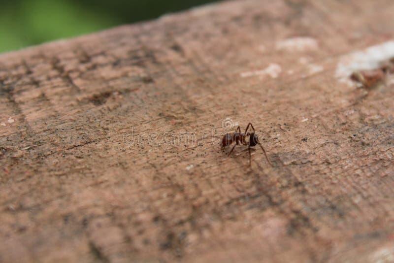 Το μικρό μυρμήγκι στοκ εικόνα με δικαίωμα ελεύθερης χρήσης