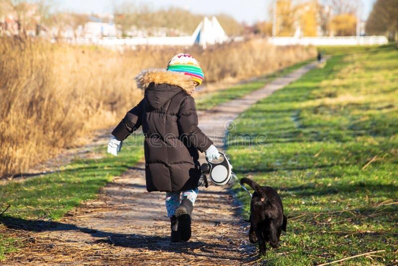 Το μικρό παιδί περπατά ένα Retriever του Λαμπραντόρ κουτάβι στοκ φωτογραφίες