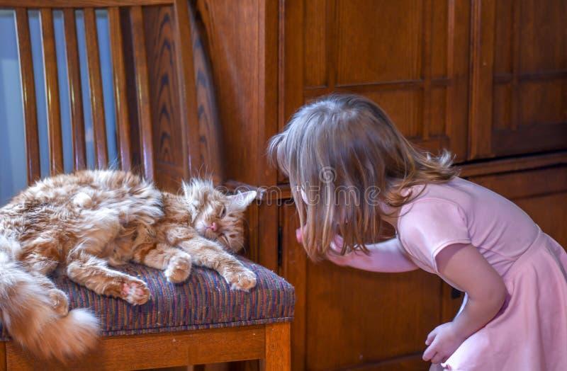 Το μικρό παιδί στο ροζ, πλησιάζει μια γάτα ύπνου στοκ εικόνα