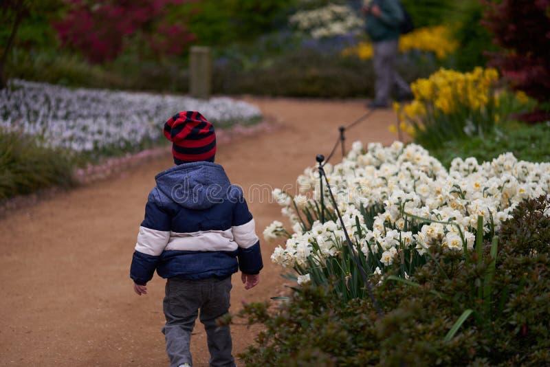 Το μικρό παιδί τρέχει και μυρίζει τα λουλούδια στοκ φωτογραφία με δικαίωμα ελεύθερης χρήσης