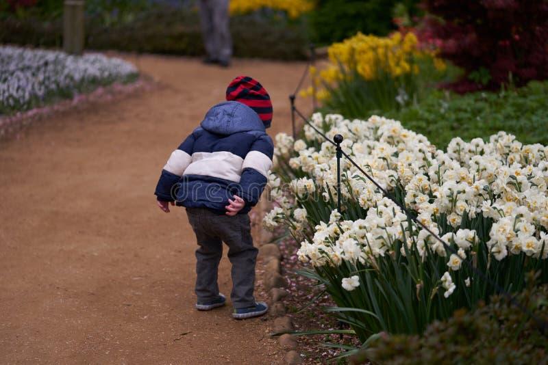 Το μικρό παιδί τρέχει και μυρίζει τα λουλούδια στοκ φωτογραφίες με δικαίωμα ελεύθερης χρήσης