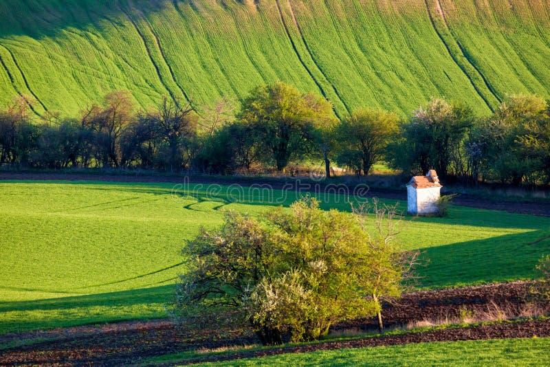 Το μικρό παρεκκλησι που περιβάλλεται από τους τομείς και τα δέντρα σίτου Όμορφο ζωηρόχρωμο τοπίο άνοιξη στη νότια Μοραβία, Δημοκρ στοκ φωτογραφία
