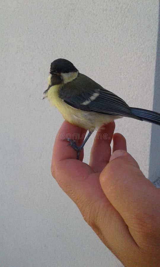 Το μικρό υπόλοιπο πουλιών στο φοίνικά μου στοκ φωτογραφία με δικαίωμα ελεύθερης χρήσης