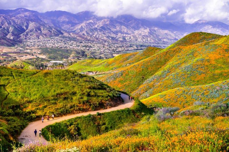 Το μονοπάτι για βάδισμα στο φαράγγι περιπατητών κατά τη διάρκεια του superbloom, παπαρούνες Καλιφόρνιας που καλύπτει τις κοιλάδες στοκ εικόνα με δικαίωμα ελεύθερης χρήσης