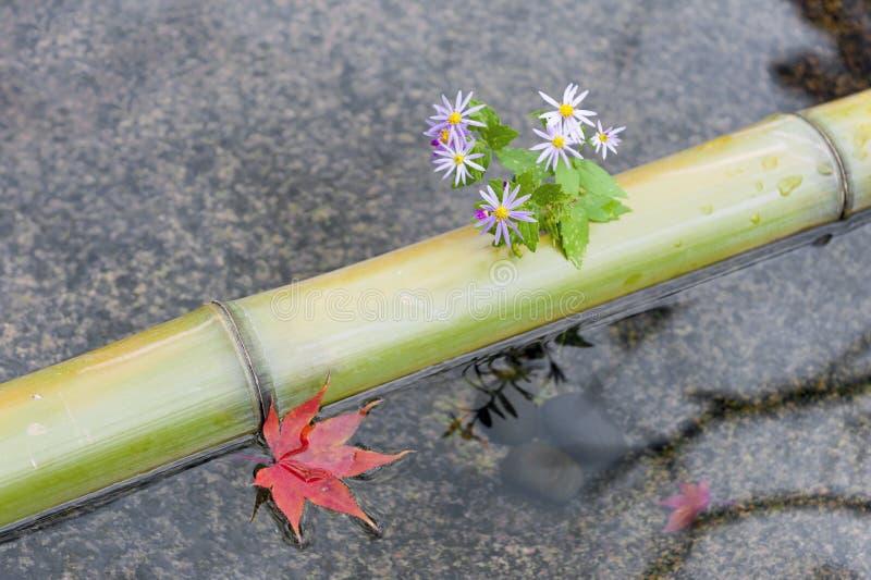 Το μπαμπού, τα λουλούδια, και το κόκκινο φύλλο σφενδάμου σε μια λεκάνη chozubachi ή νερού που χρησιμοποιείται για να ξεπλύνει παρ στοκ φωτογραφίες με δικαίωμα ελεύθερης χρήσης