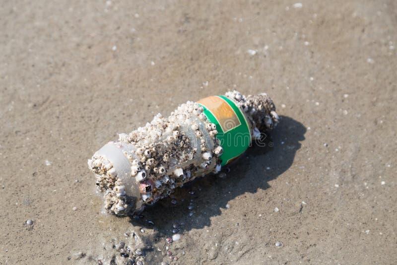 Το μπουκάλι με τα κοράλλια έπλυνε επάνω την άμμο παραλιών ακροθαλασσιών στοκ φωτογραφία με δικαίωμα ελεύθερης χρήσης