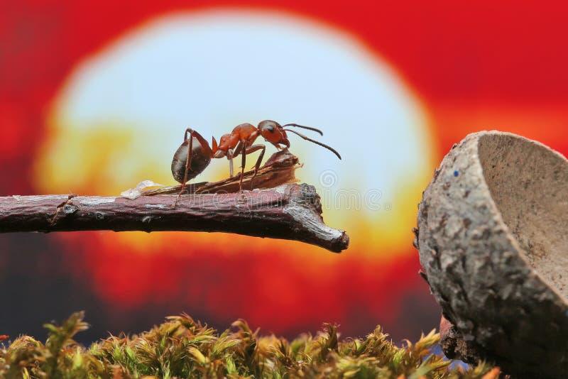 Το μυρμήγκι κάθεται σε έναν ξηρό κλάδο στοκ φωτογραφίες με δικαίωμα ελεύθερης χρήσης