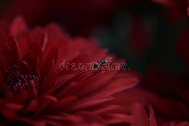 Το μυρμήγκι και το λουλούδι στοκ εικόνες με δικαίωμα ελεύθερης χρήσης