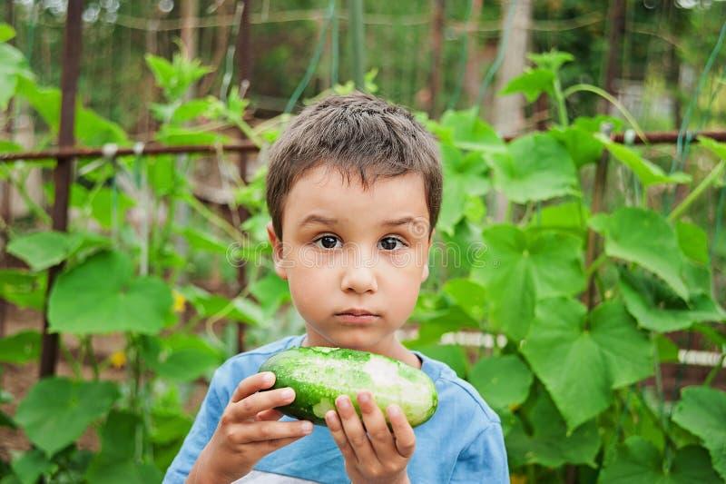 το μωρό συλλέγει τα αγγούρια από τον κήπο στοκ εικόνες με δικαίωμα ελεύθερης χρήσης