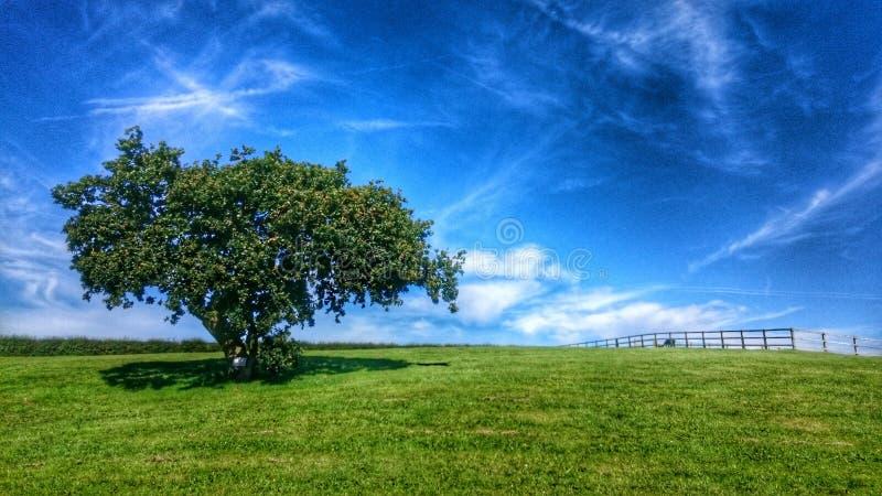 Το μόνο δέντρο κάτω από τον ουρανό στοκ φωτογραφία με δικαίωμα ελεύθερης χρήσης