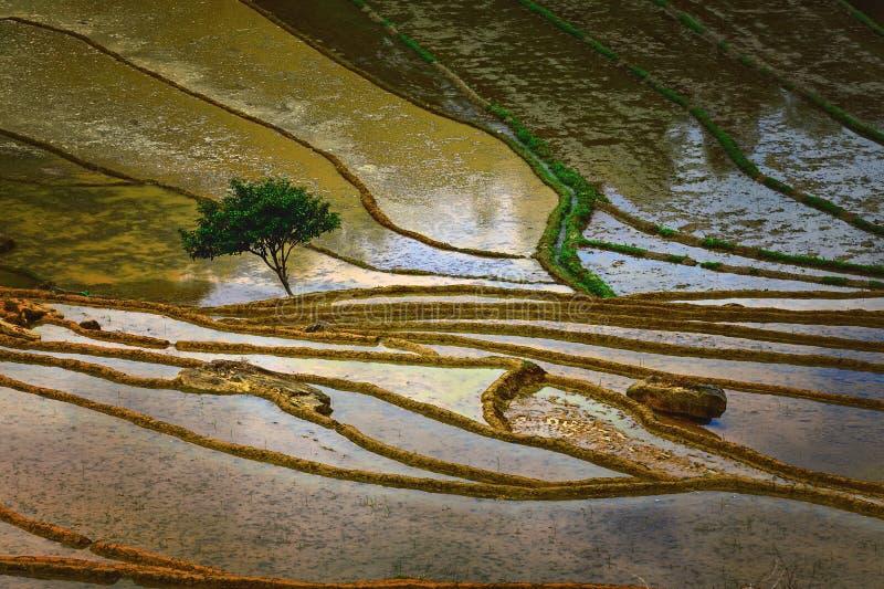 Το μόνο δέντρο στον τομέα της εποχής νερού στοκ φωτογραφία με δικαίωμα ελεύθερης χρήσης