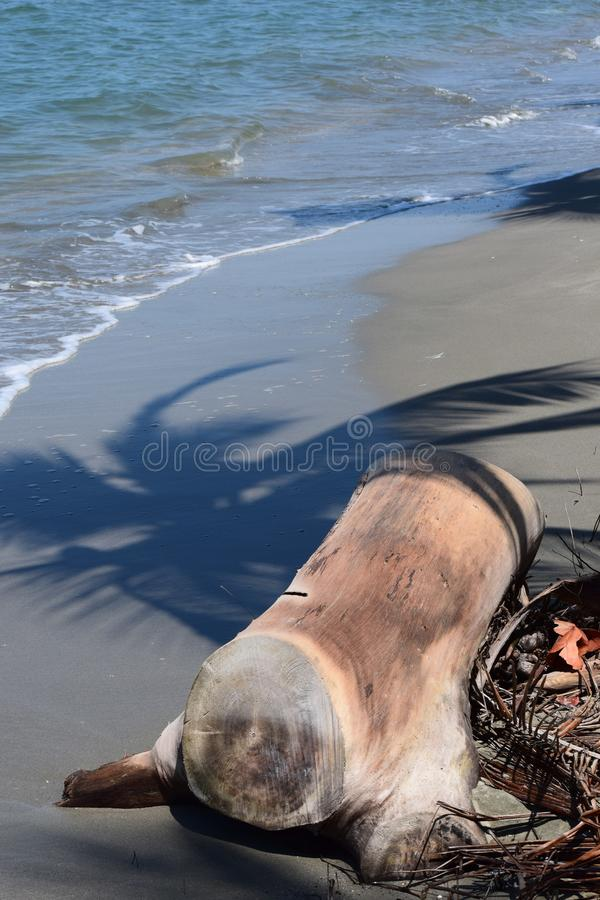 Το μόνο κούτσουρο έπλυνε στην ξηρά από την καραϊβική θάλασσα στοκ εικόνες με δικαίωμα ελεύθερης χρήσης