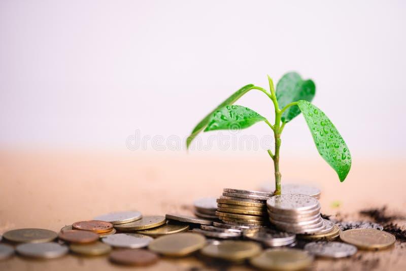 Το νέο φυτό αυξάνονται και ο σωρός νομισμάτων στοκ φωτογραφία με δικαίωμα ελεύθερης χρήσης